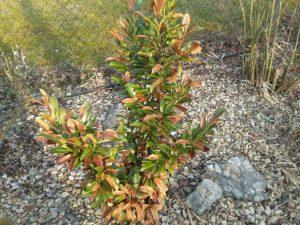 bobkovišně pozimě